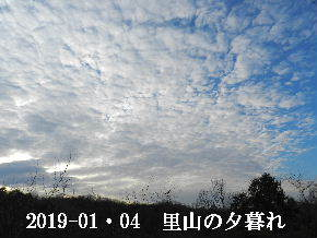 2019-01・04 今日の里山模様 (6).JPG