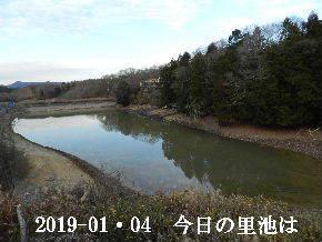 2019-01・04 今日の里池には (1).JPG