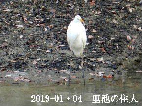2019-01・04 今日の里池には (7).JPG