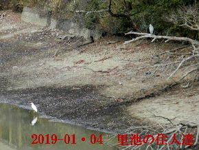 2019-01・04 今日の里池には (8).JPG