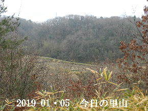 2019-01・05 今日の里山は・・・ (3).JPG