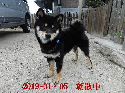 2019-01・05 今日の麻呂 (4).JPG