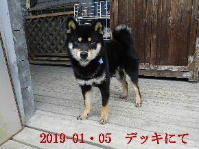 2019-01・05 今日の麻呂 (7).JPG