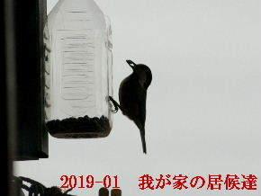 2019-01・05 我が家の居候達 (1).JPG