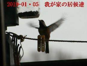 2019-01・05 我が家の居候達 (2).JPG