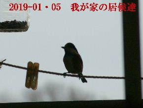 2019-01・05 我が家の居候達 (3).JPG