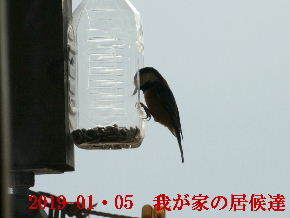 2019-01・05 我が家の居候達 (4).JPG