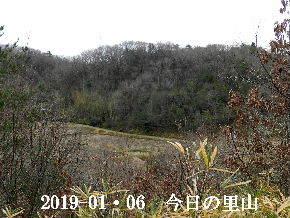 2019-01・06 今日の里山は・・・ (3).JPG