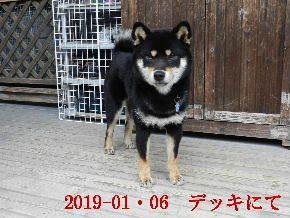 2019-01・06 今日の麻呂 (9).JPG