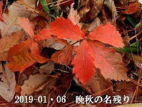 2019-01・06 晩秋の名残り (1).JPG
