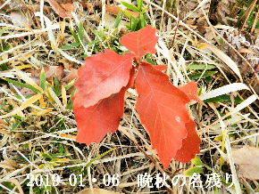 2019-01・06 晩秋の名残り (2).JPG