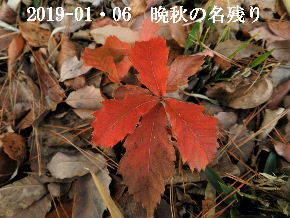 2019-01・06 晩秋の名残り (4).JPG