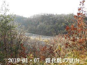 2019-01・07 今日の里山は・・・ (3).JPG