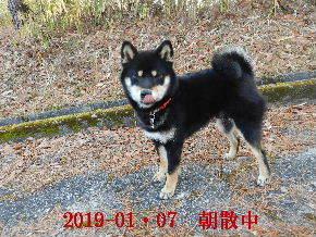 2019-01・07 今日の麻呂 (2).JPG