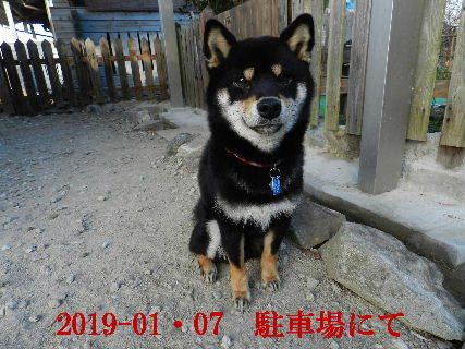 2019-01・07 今日の麻呂 (6).JPG