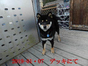 2019-01・07 今日の麻呂 (7).JPG