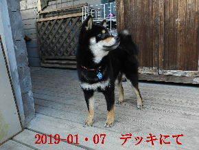 2019-01・07 今日の麻呂 (8).JPG