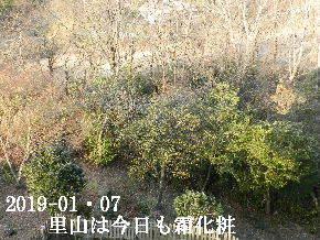 2019-01・07 里山は今日も霜化粧 (1).JPG
