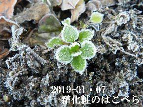 2019-01・07 里山は今日も霜化粧 (4).JPG