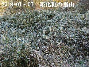 2019-01・07 里山は今日も霜化粧 (5).JPG