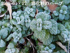 2019-01・07 里山は今日も霜化粧 (6).JPG
