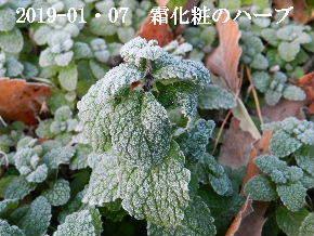 2019-01・07 里山は今日も霜化粧 (7).JPG