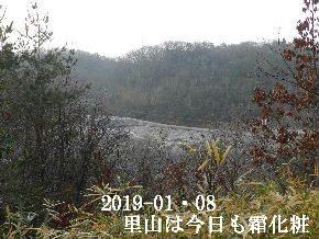 2019-01・08 今日の里山は・・・ (3).JPG