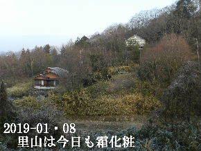 2019-01・08 今日の里山は・・・ (4).JPG