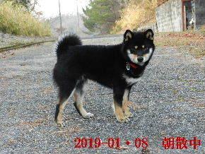 2019-01・08 今日の麻呂 (2).JPG