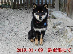2019-01・08 今日の麻呂 (4).JPG