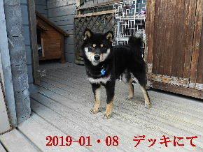 2019-01・08 今日の麻呂 (6).JPG