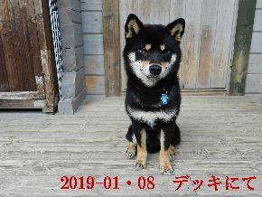2019-01・08 今日の麻呂 (7).JPG