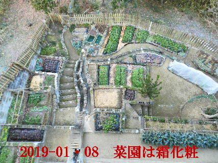 2019-01・08 霜化粧の菜園.JPG