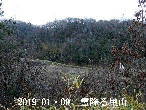 2019-01・09 今日の里山は・・・ (3).JPG