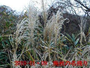 2019-01・09 今日の里山模様・・・ (2).JPG