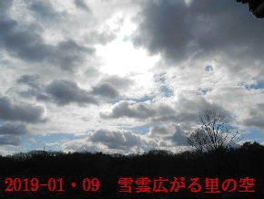2019-01・09 今日の里山模様・・・ (4).JPG
