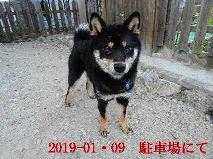 2019-01・09 今日の麻呂 (3).JPG