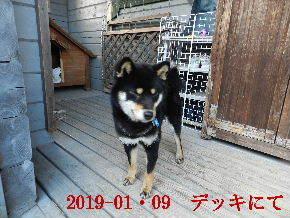 2019-01・09 今日の麻呂 (7).JPG