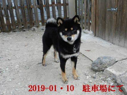 2019-01・10 今日の麻呂 (5).JPG