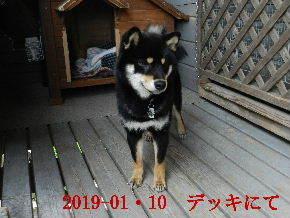 2019-01・10 今日の麻呂 (6).JPG