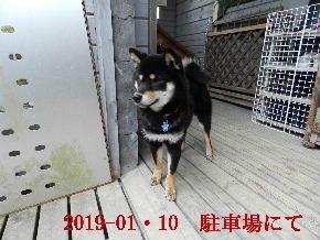 2019-01・10 今日の麻呂 (7).JPG