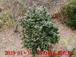 2019-01・10 里山は今日も霜化粧 (2).JPG