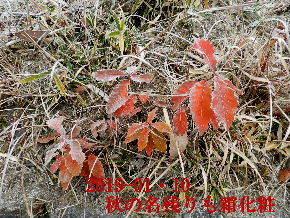 2019-01・10 里山は今日も霜化粧 (4).JPG