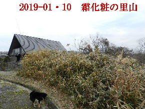 2019-01・10 里山は今日も霜化粧 (7).JPG