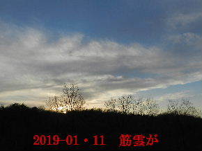2019-01・11 今日の里山模様 (2).JPG