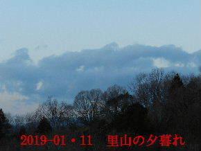 2019-01・11 今日の里山模様 (5).JPG