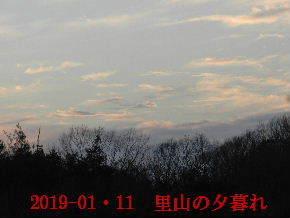 2019-01・11 今日の里山模様 (6).JPG