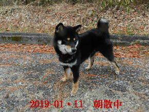 2019-01・11 今日の麻呂 (2).JPG
