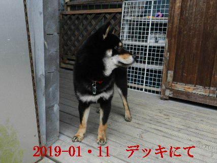 2019-01・11 今日の麻呂 (3).JPG