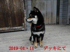 2019-01・11 今日の麻呂 (4).JPG